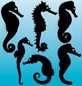 Seahorse vector silhouettes