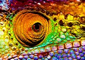 Photo of colorful reptilian eye, closeup head part of chameleon, multicolor scaly skin of lizard, african animal, beautiful exotic iguana, wild nature, fauna of rainforest