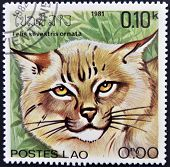 LAOS - CIRCA 1981: A stamp printed in Laos shows a Felis silvestris ornata circa 1981