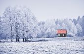 Landscape In Frost