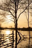 Silueta de árbol al atardecer en un campo inundado en invierno, Francia.