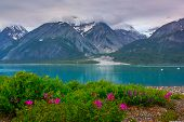stock photo of fjord  - Whild flowers in Glacier Bay National Park Alaska  - JPG