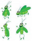 Illustration of a four grasshoppers on a white background
