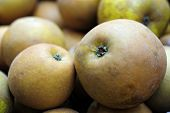 Organic, Hand-Picked Egremont Russet Eating Apple
