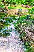 Sakura floating in the stream