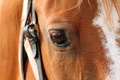 Detail Of Beautiful Horse Eye