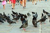 Legs In The Summer And Many Pigeons And Doves In The Italian Piazza