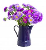 bouquet of violet aster flowers