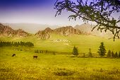 Yourt Camp In Terelj National Park