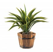Agave In Wood Bucket -artificial Plant
