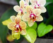 Green Yellow Orchid Flower