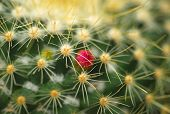 Pink Flower On Cactus Plant