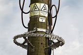 Safety features on electricity pole.