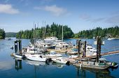 Marina at Bamfield, British Columbia