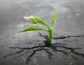 stock photo of vegetation  - Little flower sprout grows through urban asphalt ground - JPG