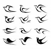 Bird Vetor Icon Set
