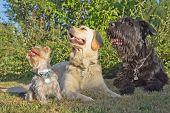 Three Dogs At The Kawn.