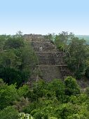 Temple At Calakmul