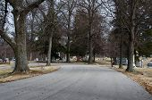 Tree Lined Cemetery Road