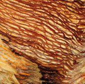 Worm Wood Macro
