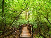 Jungle Landscape. Wooden Bridge At Tropical Rain Forest. Doi Inthanon Park,thailand
