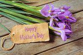 Flowers Irises