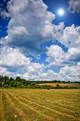 mown hay with lines spring or summer background