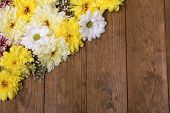 Beautiful chrysanthemum flowers on wooden background