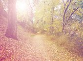foto of hazy  - a forest with the sun shining through done with a retro vintage instagram filter - JPG