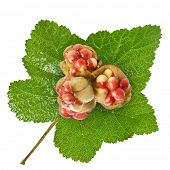 Fresh Cloudberry ( Rubus chamaemorus) close up isolated on white