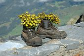 Hiking Boots With Flowers Inside In The Mountains