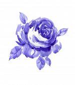 Single violet rose watercolor painted