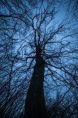 Strange branching tree silhouette.