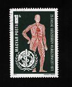 Man Blood System, Healthcare Concept