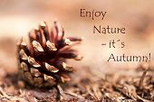 Fir Cone With The Words Enjoy Nature, Its Autumn