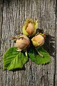 Three Hazelnuts On Wooden Background