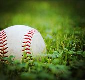 a square photo of a baseball in a grass background toned with a vintage retro instagram filter  eff