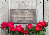 Flower border of red roses by blank rustic wooden sign hanging on fence