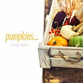 Autumn composition ( pumpkins and corn on old wooden table). Thanksgiving day concept (with easy rem