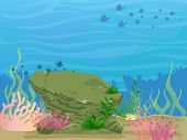Coral Reefs Underwater Life