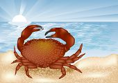 Crab At Sea