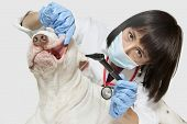 Portrait of female veterinarian examining dog with otoscope over gray background