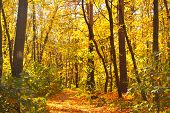 Beautiful landscape - road in autumn forest