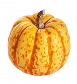autumn halloween pumpkins isolated