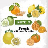 Set of Fresh Citrus Fruits Of Lemon, Mineola, Clementine, Pomelo, Bergamot And Mandarin