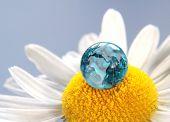 The earth on a daisy