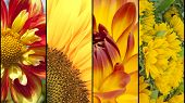 Collage Of Yellow And Red Flowers