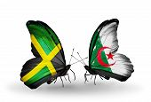 Two Butterflies With Flags On Wings As Symbol Of Relations Jamaica And  Algeria