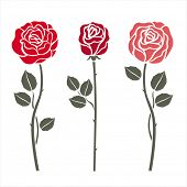 Red roses on white. Vector illustration.