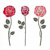 Red roses on white. Vector illustration.